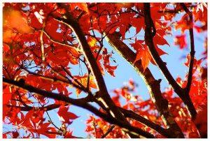 autumn colors leaves